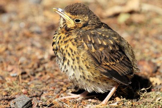 Envol avec les oiseaux migrateurs for Oiseaux du sud de la france